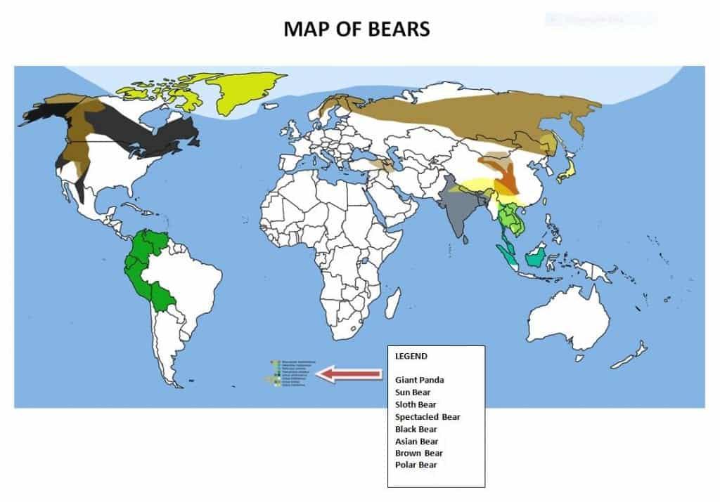 map of bears around the world