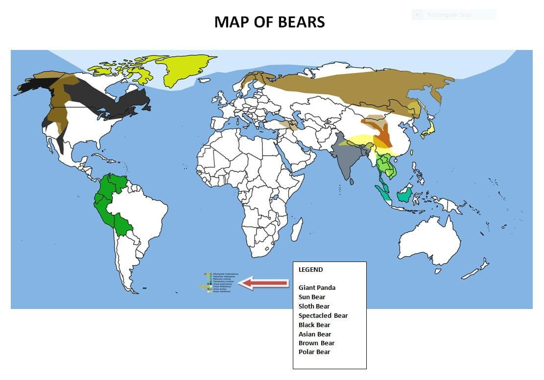 map of bears around the world