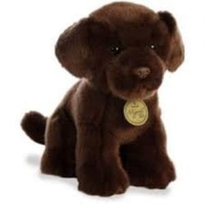 chocolate labrador teddy