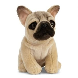 french bulldog teddy