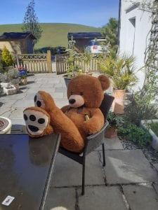 Mr and Mrs Bear relaxing at Bears4u
