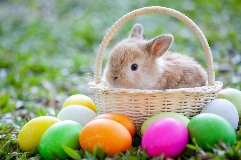 where did the Easter bunny come from
