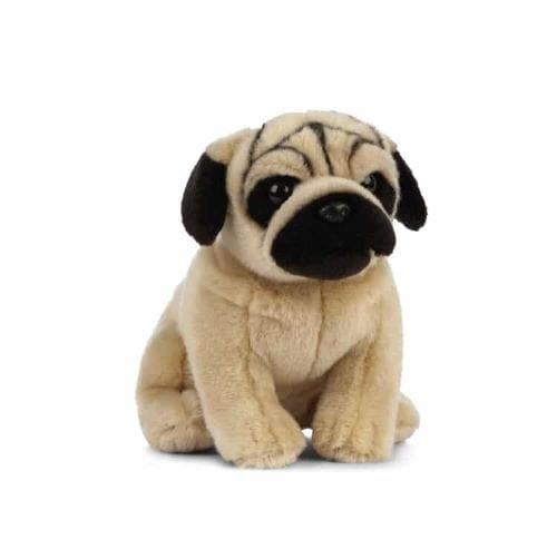 pug teddy