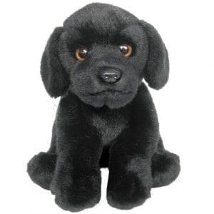 Black Labrador Teddy
