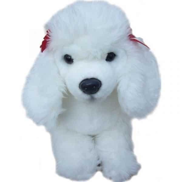 white poodle teddy