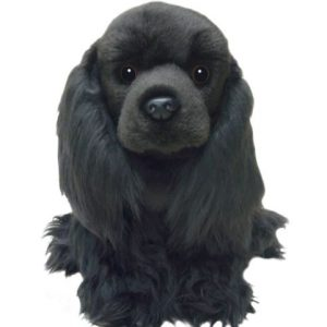 black cocker spaniel teddy